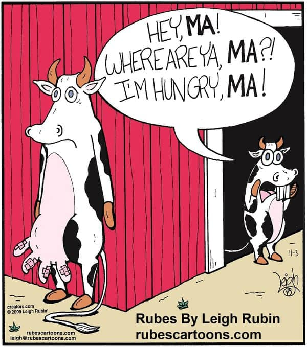 breastfeeding comic with mama cow hiding